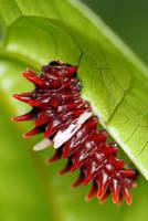 Caterpillar 03 by josgoh