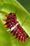 Caterpillar 03