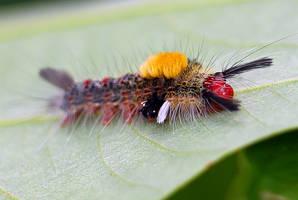 Caterpillar 04 by josgoh