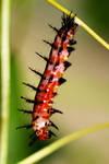 Caterpillar 05