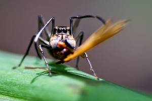 Spider 17 by josgoh