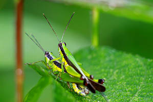 Grasshopper 10 by josgoh