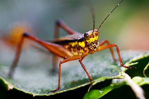 Grasshopper 12 by josgoh