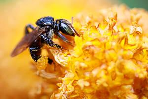 Bee 03 by josgoh
