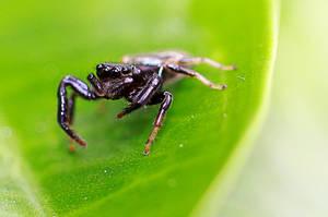 Spider 21 by josgoh