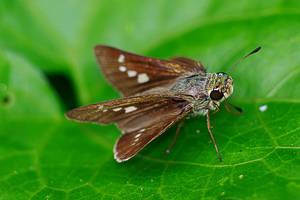 Butterfly 19 by josgoh