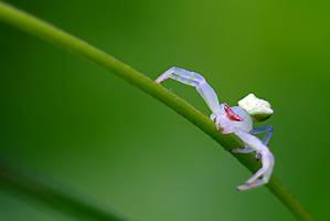 Spider 24 by josgoh
