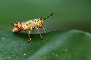 Grasshopper 17 by josgoh