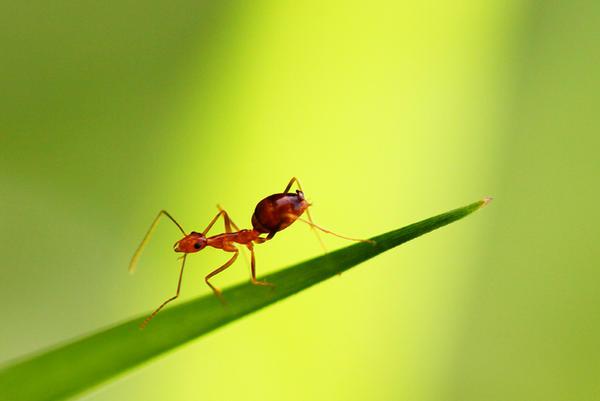 Ants 02 by josgoh
