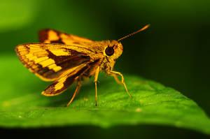 Butterfly 20 by josgoh