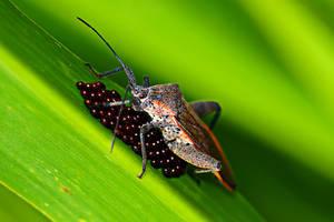 Bug 10 by josgoh