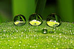 Droplet 64 by josgoh