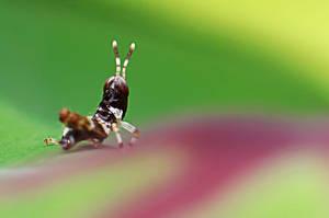 Grasshopper 27 by josgoh