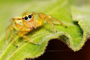 Spider 41 by josgoh