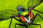 Insects 56