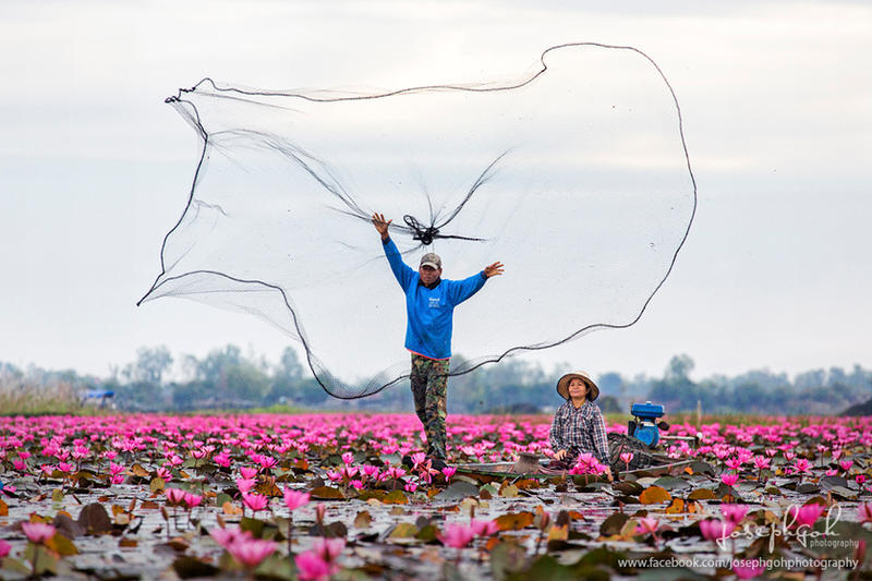 Fisherman at Red Lotus Pond by josgoh