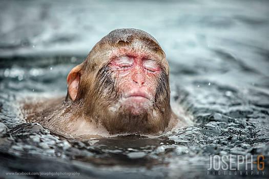Snow Monkey Emerged, Japan