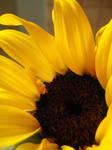 Sunflower II by bunnybritt