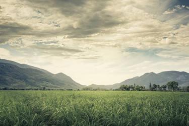 Misty Mountains by InfuzedMedia