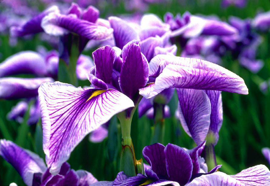 Flower 2 by ZOLTAR2003