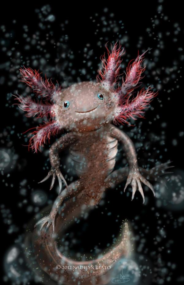 Axolotl by NadilynBeato on DeviantArt