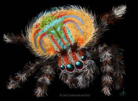 Austrailian Peacock Jumping Spider by NadilynBeato
