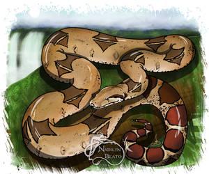 Boa Constrictor by NadilynBeato