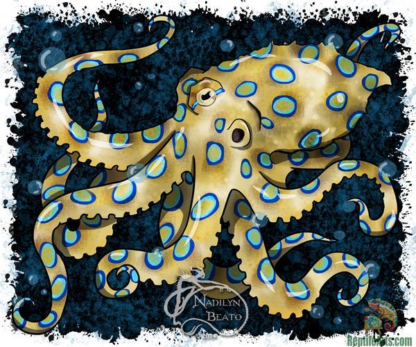 Blue Ringed Octopus by NadilynBeato on deviantART
