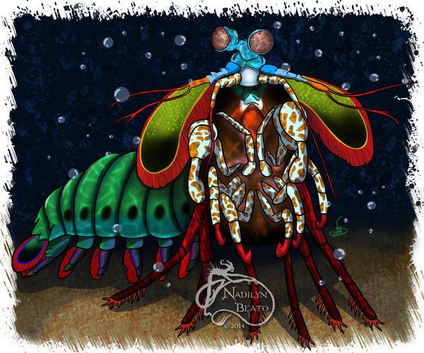 Mantis Shrimp by NadilynBeato