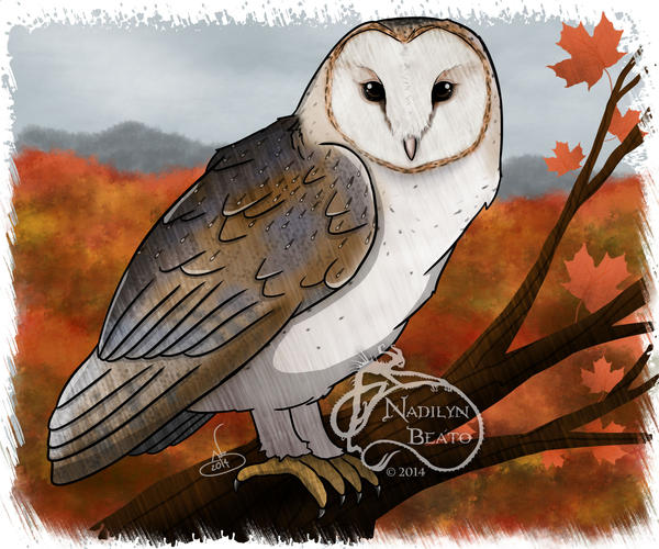 Barn owl by NadilynBeato