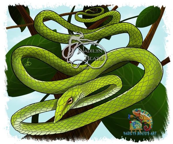 Green Vine Snake by NadilynBeato