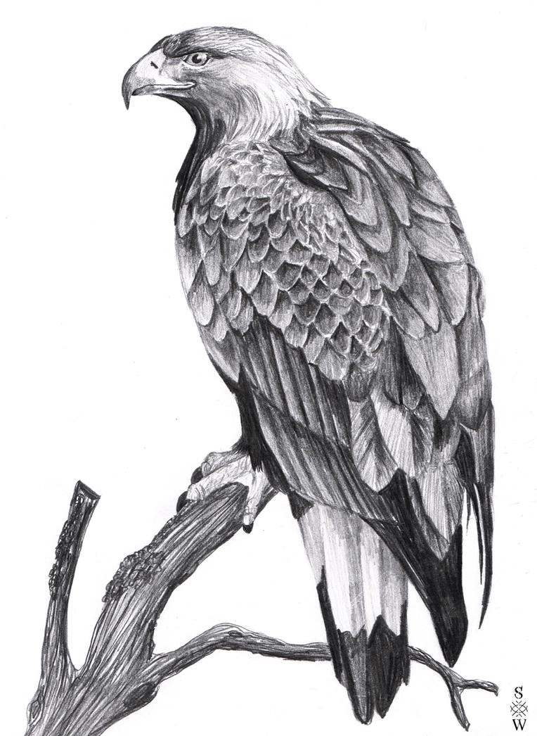 Golden Eagle by Glaiceana