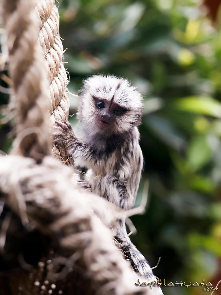 Little Monkey by chanyto