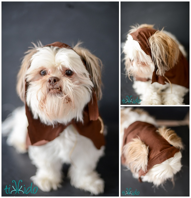 No Sew Ewok Star Wars Dog Costume by tikkido ... & No Sew Ewok Star Wars Dog Costume by tikkido on DeviantArt