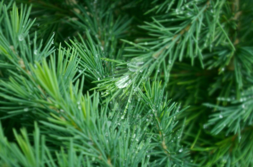 Rainy day... by dr-blackross