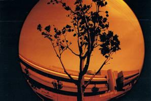 Fish Eye: Tree (Redscale) by ohScorpio