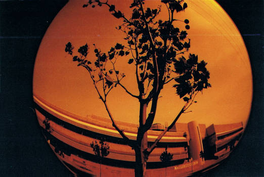 Fish Eye: Tree (Redscale)