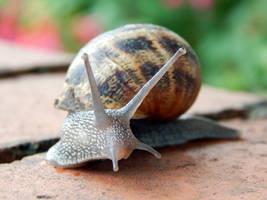 Snail by PatrickJr