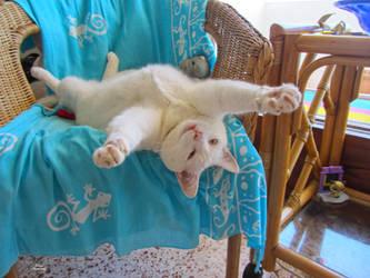 Stretch by SARAYA-PFEIFFER