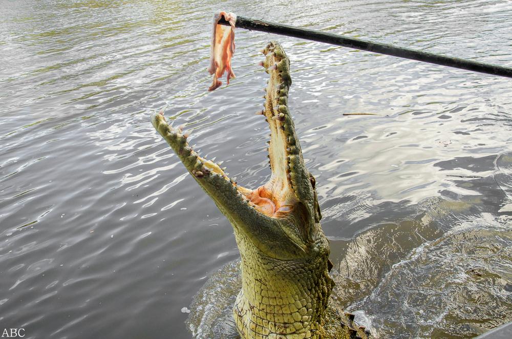 Teasing a Croc by Tyrannax