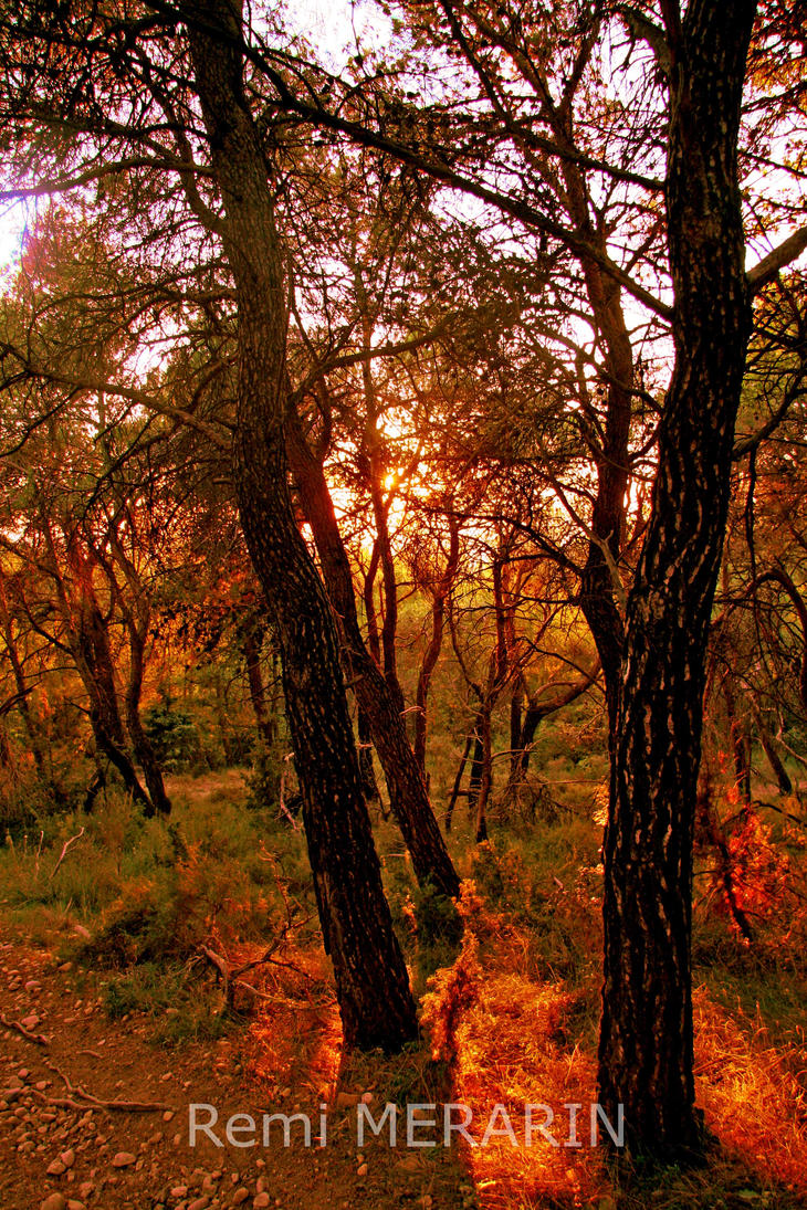 Sunset trough trees by Rems84