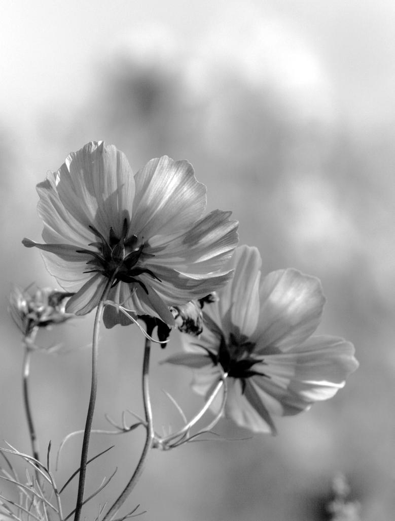 Spring by Atenodor