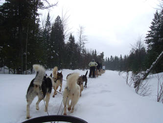 Dog Sledding 04 by SHELBYTHEMONSTER
