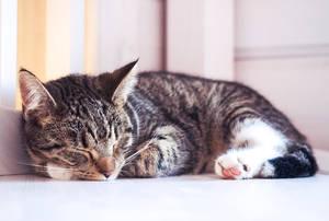 Lara kitten by emmalhola