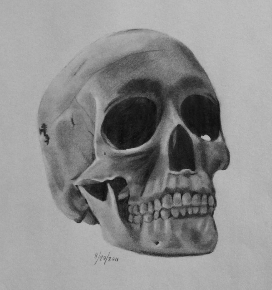 Skull by Feathery-Wings