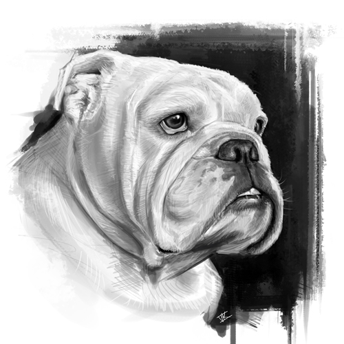 Portrait of Onni the English Bulldog by vkupila on DeviantArt