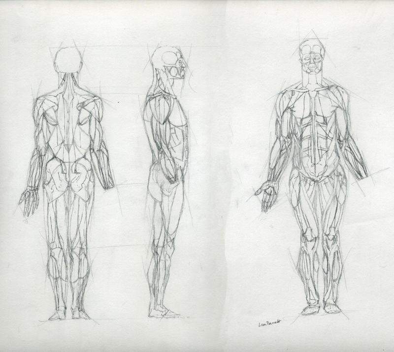 Muscle Study by Sne-aks