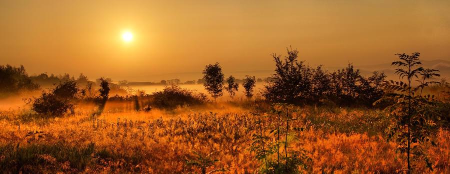 Morning by JarJirasek