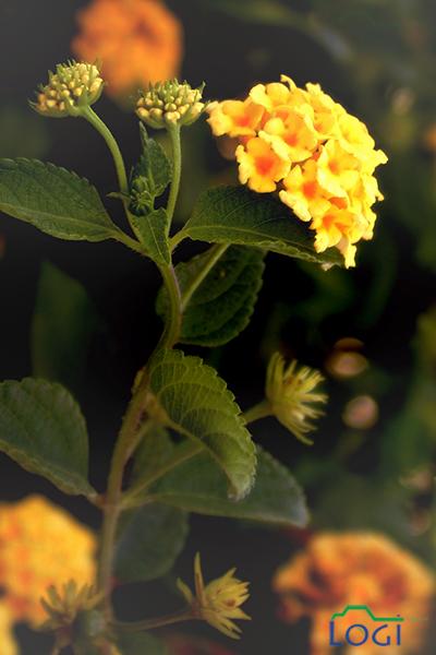 Yellow Flowers by lojein