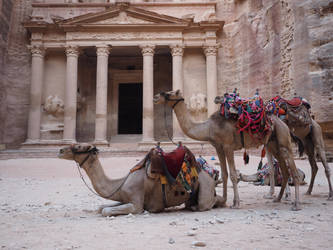 camels and old architecture by wam17